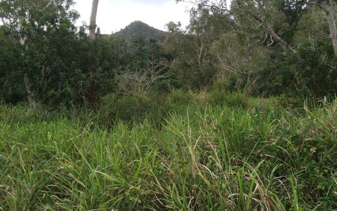 Terrain entre TONGHOUE et Mt-KOGHI (Dumbéa)